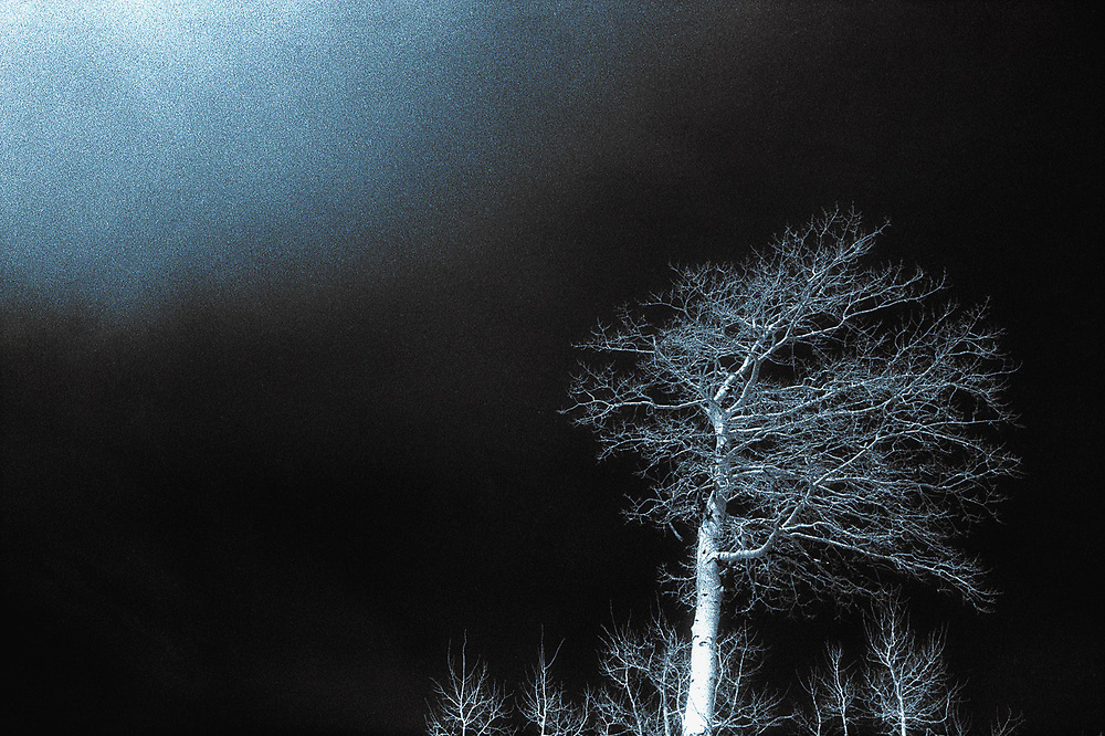 Aspen tree, selectively colored black and white infared, Utah, USA
