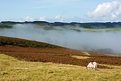 © Licensed to London News Pictures. 29/09/2020.  Builth Wells, Powys, Wales, UK. Mist rolls over the Welsh landscape as large cumulus clouds build overhead on an autumnal morning near Builth Wells in Powys. Photo credit: Graham M. Lawrence/LNP