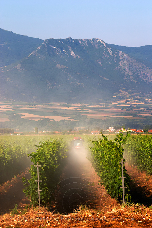 Spraying with a tractor in the vineyard. Ktima Pavlidis Winery, Drama, Macedonia, Greece