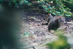 THEMENBILD - ein Eichhoernchen waehrend einer Sumpf-Tour, aufgenommen am 06.08.2019, Ort, Vereinigte Staaten von Amerika // a squirrel during a swamp tour, New Orleans, United States of America on 2019/08/06. EXPA Pictures © 2019, PhotoCredit: EXPA/ Florian Schroetter