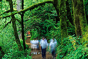 Image of hikers on a trail at Silver Falls State Park, Oregon, Pacific Northwest by Randy Wells