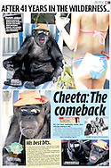 Daily Mirror (UK), 8th July 2008 Page 3..EXCLUSIVE 24th June 2008, Palm Springs, California. 76-year-old Cheeta, star of many Hollywood Tarzan films of the 1930s and 1940s, is coming out of retirement. Recognized as the oldest chimpanzee alive, the Palm Springs resident has just signed a record deal. To celebrate the signing, Cheeta made a promo music video to accompany his cover of the 1975 hit song 'Convoy'. PHOTO © JOHN CHAPPLE / www.johnchapple.com<br /> tel: +1-310-570-9100