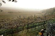 COVIBIO, COLLECTIVE wine producers , Italy, Veneto