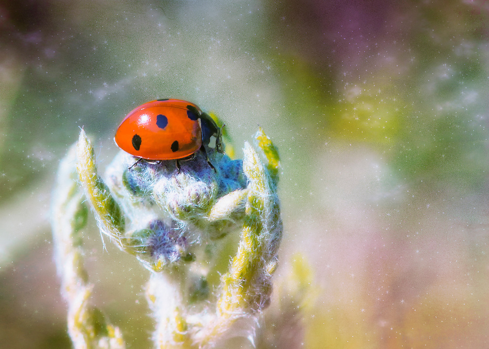 A ladybug sits nestled in the foliage just in range of my macro lens