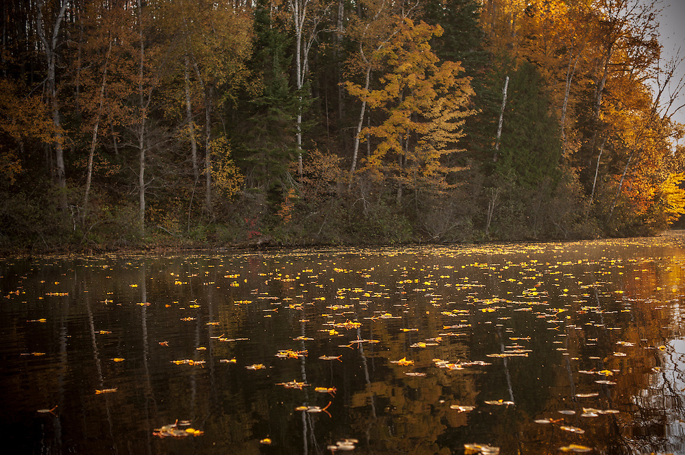 Fall color along the Indian River National Wild and Scenic River of the Hiawatha National Forest in Michigan.