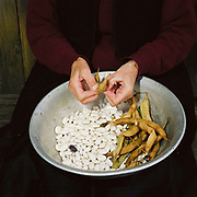 A Romanian peasant farmer shells beans from her garden into a metal bowl outside her home, Botiza, Maramures, Romania. 90% of vegetable production is grown in small household plots and mainly used for self-consumption and for sale on local markets.