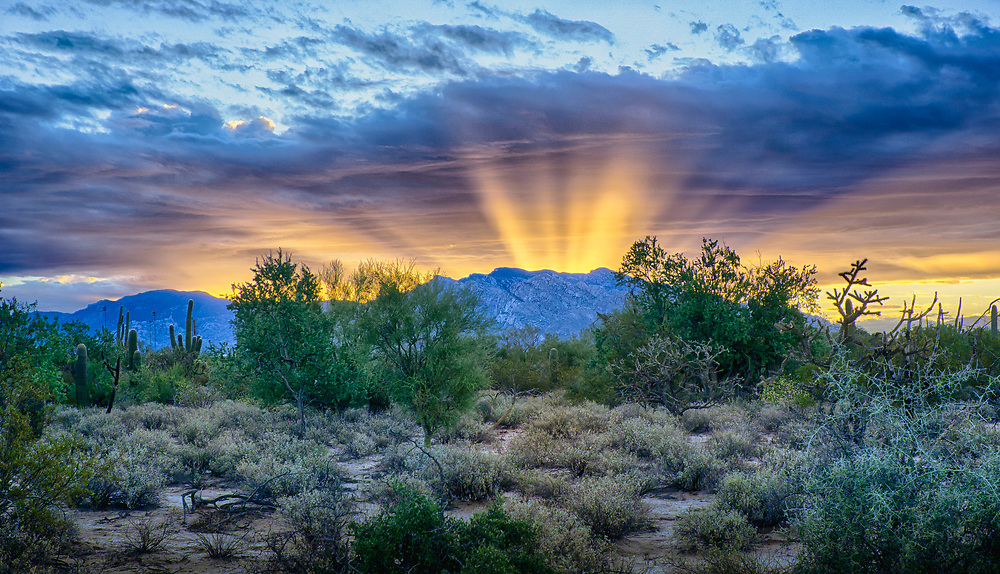 Yes, this really happened. One magical morning in Tucson, Arizona