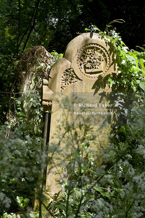 Overgrown Victorian headstone, almost covered in undergrowth in Nunhead Cemetery whose deceased occupants were important members of society from the industrial age. During this annual open day, it is an opportunity for the Friends of the cemetery to celebrate and educate Londoners, old and young - thereby helping to preserve and conserve this historic site.