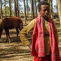 Watcher of the Horse by Tarikawa Tesfaye