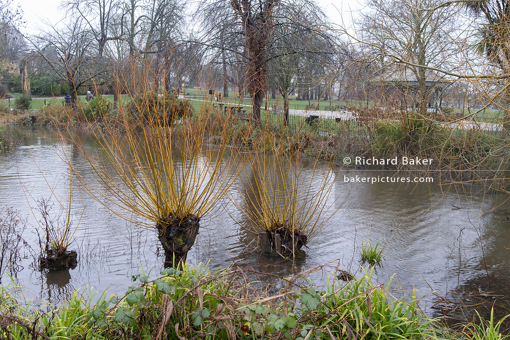 Water levels remain high in one of two ponds in Ruskin Park in Lambeth, south London, during further heavy overnight rainfall, on 30th January 2021, in London, England.