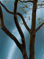 A tree is silhouetted against the undulating wall of the Experience Music Project and Science Fiction Museum at Seattle Center, Seattle, Washington, USA