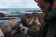Biologist and researcher Dr. Filippo Galimberti, geotagging the GPS  position of southern elephant seals, Mirounga leonina.