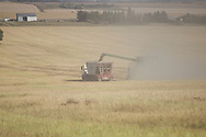 Photo: Randy Vanderveen <br /> Sexsmith, Alberta<br /> Saturday, September 14, 2013<br /> The Greg Sears farm.