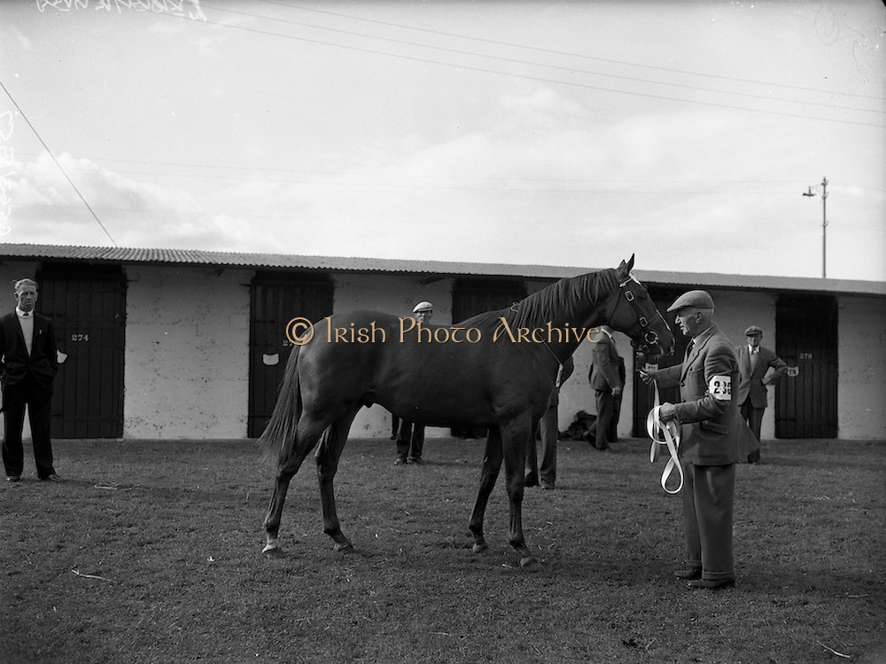 """20/09/1960<br /> 09/20/1960<br /> 20 September 1960<br /> Goffs Bloodstock Sales at Ballsbridge, Dublin. Image shows Mr. P.A. Love's """"Never Say Die"""" colt that was sold for 12,200 Guineas to Vigor and Co. Bloodstock Agency."""