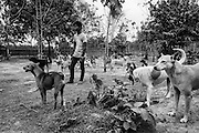 Caretakers watch over  rescued dogs in one of the open areas of the Yangon Animal Shelter.