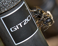 Bumblebee on a carbon fiber tripod. Wild basin trail in Rocky Mountain National Park. Image taken with a Nikon D2xs camera and 105 mm f/2.8 VR macro lens (ISO 100, 105 mm, f/11, 1/100 sec).
