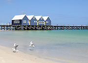 AUSTRALIA - BUSSELTON two seagulls land on the beach in front of Busselton Pier 09/01/2010. STEPHEN SIMPSON...