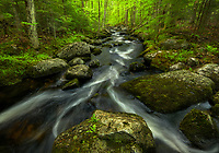 Fresh spring greens and good flows on Beaver Brook, Groton State Forest, Vermont, USA