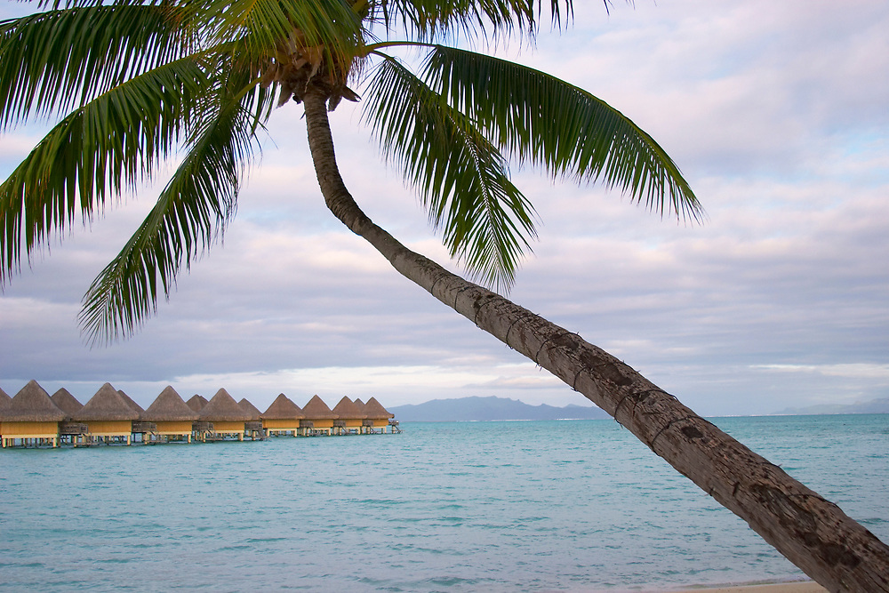 Overwater bungalows with palm tree, Bora Bora, Society Islands, South Pacific