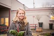 Isa Swain picks rainbow chard from her school's garden in Salem, Oregon.
