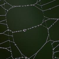 Close-up of rain drops on a spider web, Big Meadows, Shenandoah National Park, Virginia.