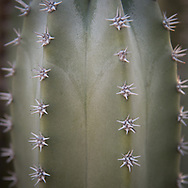 Another fine specimen from Desert Botanical Garden in Phoenix.