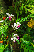 Orchids of the Amazon, Cloud Forest Dome, Gardens by the Bay, Singapore, Republic of Singapore