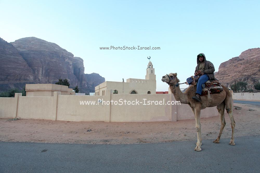 Camel and rider walk past the Mosque in Rum village, Wadi Rum, Jordan