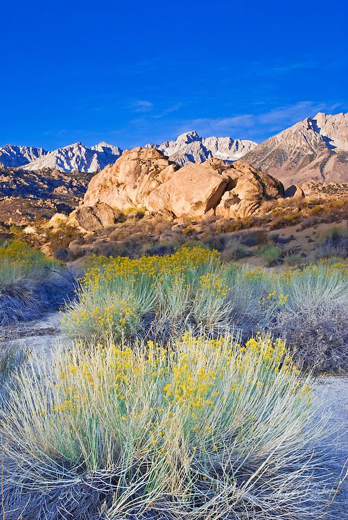 Morning light on the High Sierra from Buttermilk Country, Bishop, California