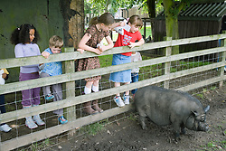 Children looking at a Rare Breed pig on a visit to a city farm,