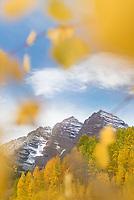 Aspen groves burst with fall colors at Maroon Bells near Aspen, Colorado.