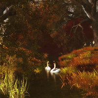 For those who love nature scenes, this image depicting two swans in a forest is certainly going to take your breath away. These two swans have been together for a long time. We can imagine this easily. We can imagine the journey that has brought them to this moment in time. Through all of it, they have remained together. They are here to appreciate the extraordinary beauty of their surroundings together. This is an image that has the ability to captivate almost anyone. The details are going to capture your attention. Available as canvas wall art or as framed wall art. .<br />