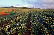Pineapple Fields, Wahiawa, Oahu, Hawaii<br />