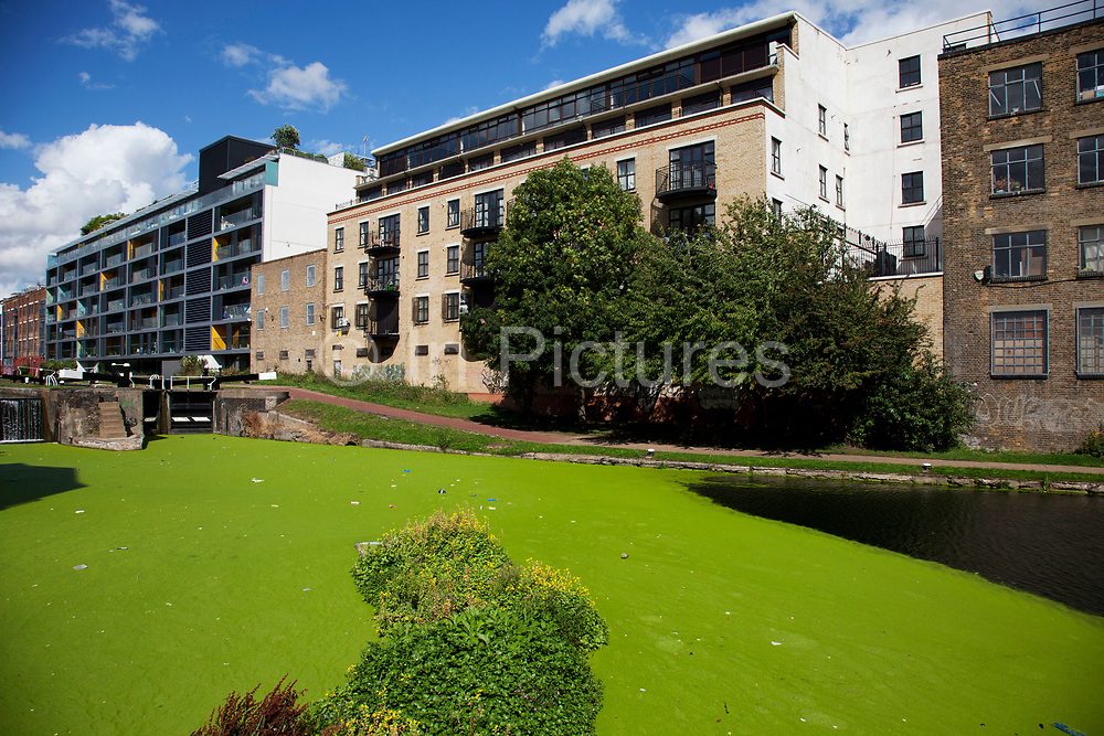 Green weed engulfs Regents Canal in East London. This canal cuts all the way up through and across east and north London providing a natural yet industrial refuge for those that use it for leisure or living. Many small apartment buildings now line the canal.