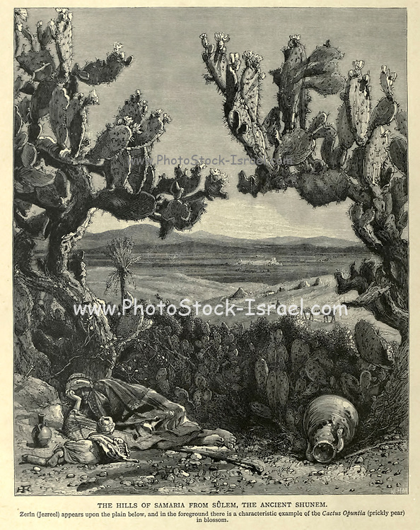 Engraving on Wood of The Hills of Samaria from Sulem (or Shunem), the ancient Shunem with a prickly pear cactus in the foreground from Picturesque Palestine, Sinai and Egypt by Wilson, Charles William, Sir, 1836-1905; Lane-Poole, Stanley, 1854-1931 Volume 2. Published in New York by D. Appleton in 1881-1884