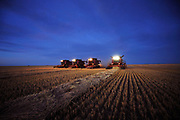 Combines harvest wheat during sunset on the Stephen and Brian Vandervalk farm near Fort MacLeod, Alberta, September 26, 2011. REUTERS/Todd Korol (CANADA)