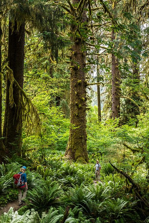 A man and woman hiking the Hoh River trail, Hoh Rainforest, Olympic National Park, Washington, USA.