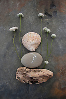 Buckwheat Flower with fossil and driftwood.