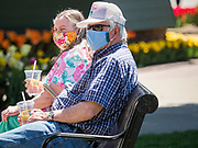"""03 MAY 2020 - PELLA, IOWA: People wearing masks to prevent the spread of Coronavirus sit on a park bench in downtown Pella, Iowa. Pella is a small community in central Iowa. The town's economy is driven by tourism and the Tulip Festival, the largest tourist event of the year, has already by canceled for 2020 because of fears that the festival could become a COVID-19 (Coronavirus/SARS-CoV-2) """"Super Spreader"""". The Governor of Iowa reopened 77 of Iowa's 99 counties. The counties that were reopened have reported low incidences of Coronavirus. Marion County, where Pella is located, has reported 12 cases of Coronavirus. There have been 9,169 confirmed cases of Coronavirus in Iowa, including 1,476 cases in the Des Moines area, less than one hour away. Many people from Des Moines drove to Pella this weekend to see the tulips for which the town is famous.      PHOTO BY JACK KURTZ"""