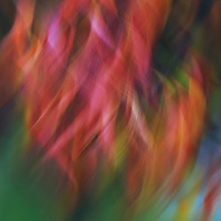 """""""Colour Swirl""""<br /> <br /> Amazing colorful abstract artwork in a beautiful flowing form!"""