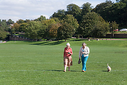 Women walking a dog on the park,