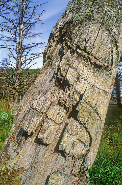 The Haida Indians were the first known inhabitants of the Queen Charlottes (Haida Gwaii). <br /> <br /> The now abondoned Ninstant village is a world heritage site and contain the worlds oldest standing totems.