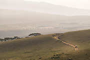 Distant view of a 4x4 driving along a dirt road through the Ngorongoro Highlands, Tanzania