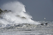 Stormy sea with Gannet - Hurricane Ophelia, Isles of Scilly