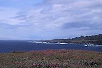 Wildflowers on the Headlands looking north up the coastline, Mendocino California