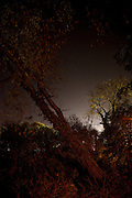 suburbia at night<br /> andy spain photographer<br /> asvisual<br /> trees hedge light