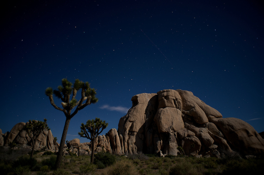 Intersection Rock and Joshua Trees beneath the night sky.