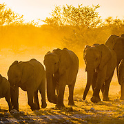 Wildlife and Animals