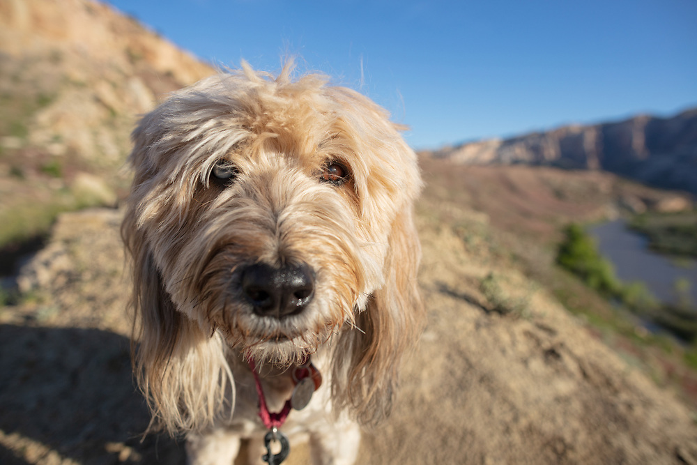 fluffy dog standing on overlook on River trail in Dinosaur National Monument