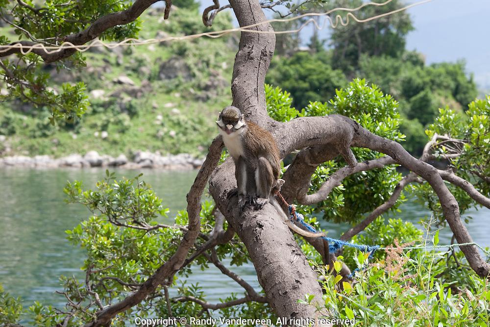 Photo Randy Vanderveen.near Kibuye.View on Amahoro Island in Lake Kivu.